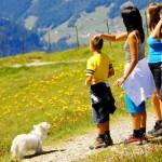 Partir avec son animal de compagnie en vacances : les conseils
