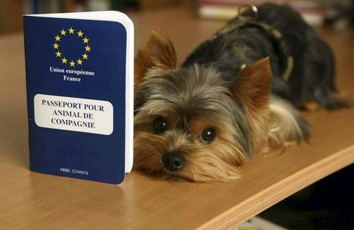 passeport animal