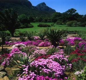 jardin-afrique-du-sud