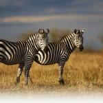 Les trésors du Kenya