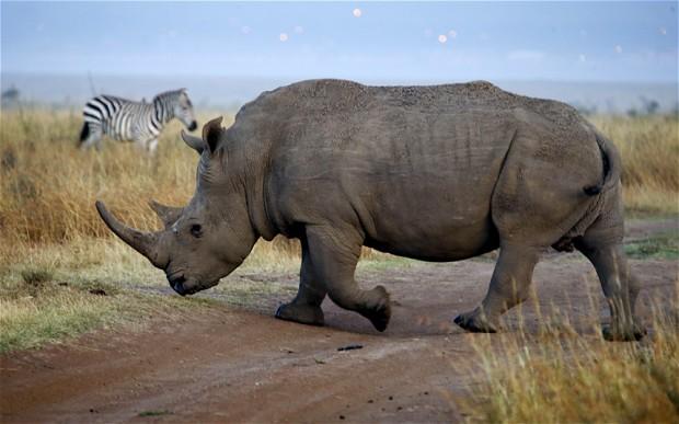 rhino-kenya_