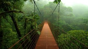 costa-rica-foret-des-nuages
