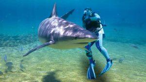 nosy-be-requin