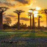 Une aventure unique à Madagascar